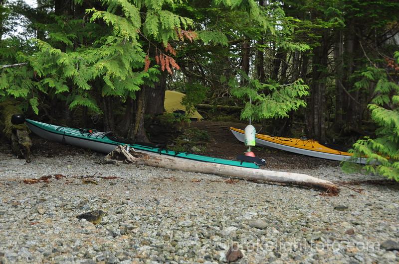 Milne Island Campsite
