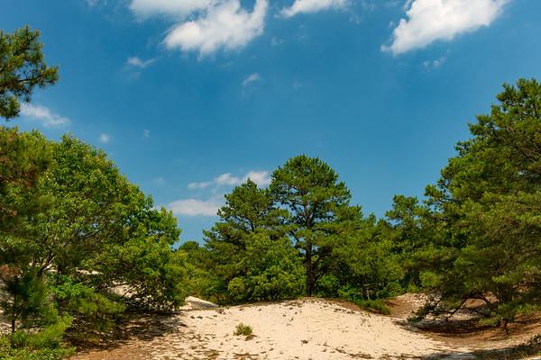 Cape Henlopen State Park, DE (5 Images)