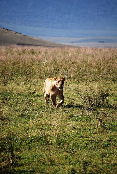 Ngorongoro (62).JPG