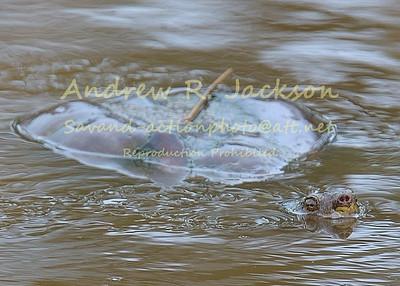 3-29-14 Jamestown Turtles