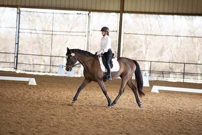 Horse 61