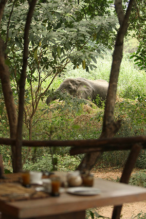 East Africa, Serengeti and Zanzibar - Lake Manyara Tree Lodge - Day 2