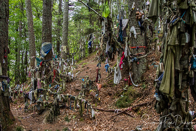 The Clootie Well at Munlochy, Scotland 5-2018