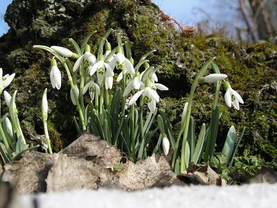 2004-03-14 Garten