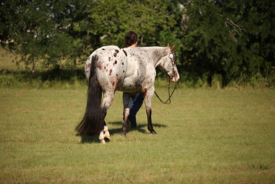 Brittany Billow Show Horses