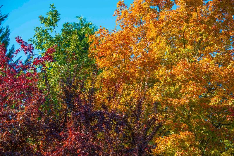 Jacksonville Fall Colors-1.jpg
