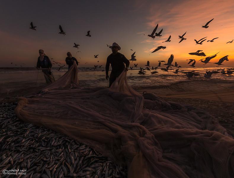 Sardine Season (60)- Dhofar.jpg
