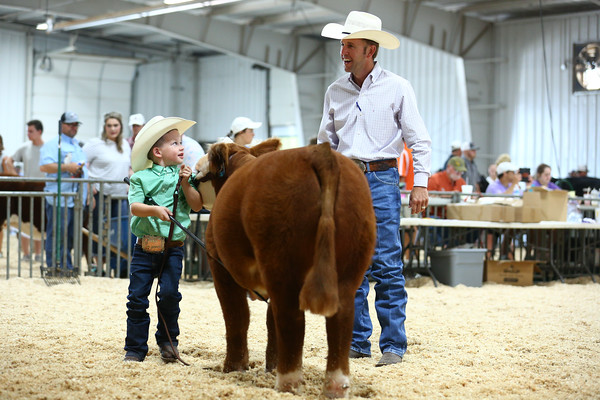 Pre-Jr Mini Hereford Show