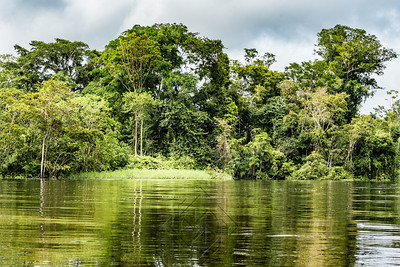 Riverbank of the Rio Samiria Amazon