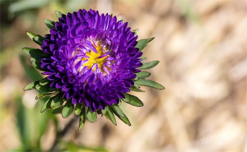 Blumen zum Selberschneiden - 2015-08-13- 0U5A1501.jpg