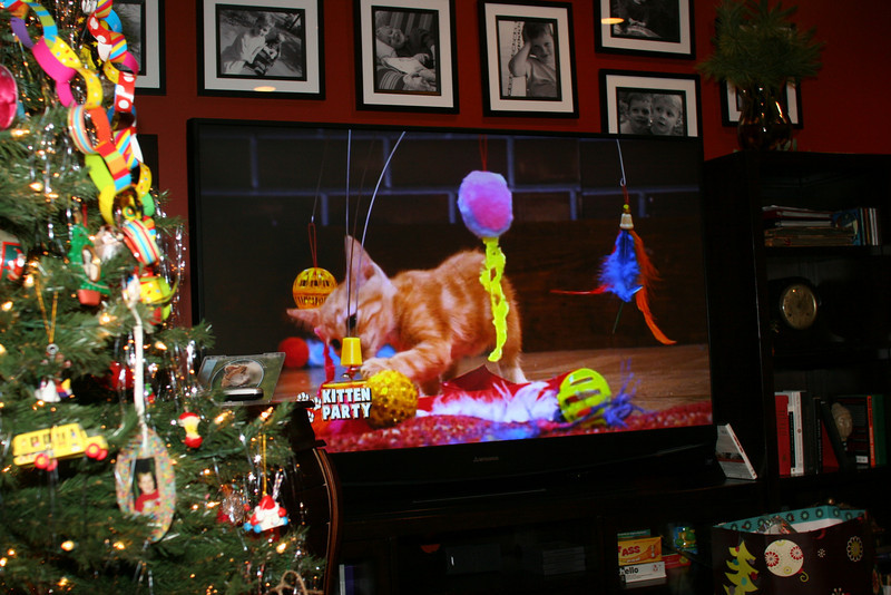 """Chris got """"Kittten Party"""" DVD in his stocking - guess he's been a really good boy!"""
