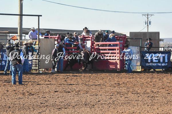 Steer Saddle Bronc