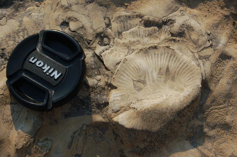 Large-coral-fossil-falls-ohio.JPG