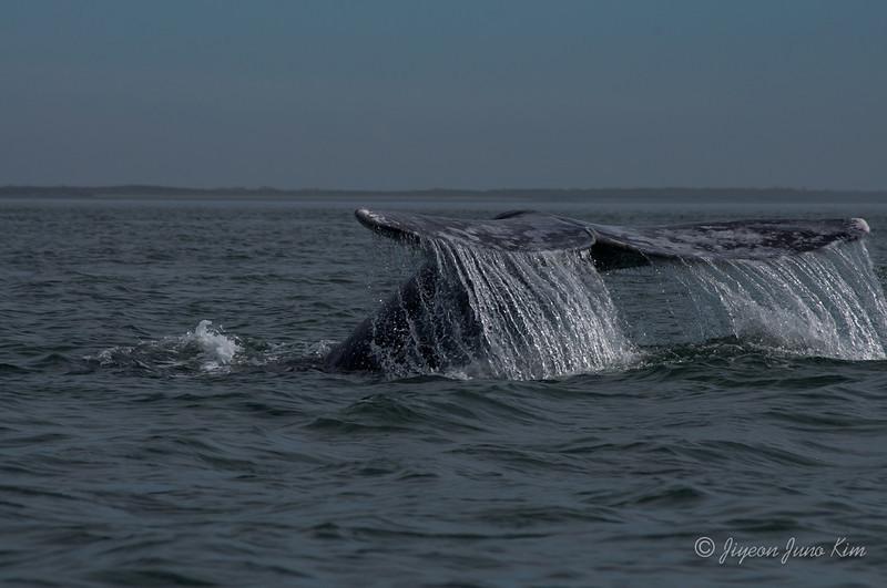 Mexico-Loreto-Whale-2406.jpg