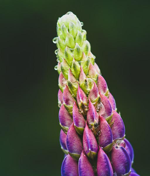purple flower 2.jpg