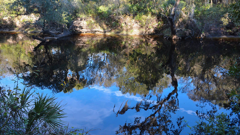 Sleeping Turtles Preserve Myakka River