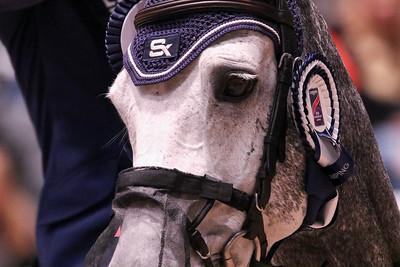 KINGSLAND OSLO HORSE SHOW 2017