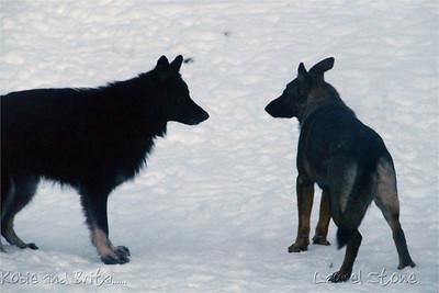 2007-2008 Brita Playing - A great display of dog body language.