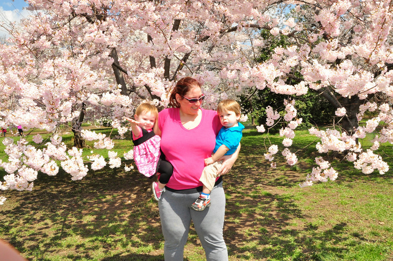 Cherry Blossoms 2014 083.jpg