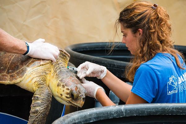Animal Rescue & Wildlife Conservation