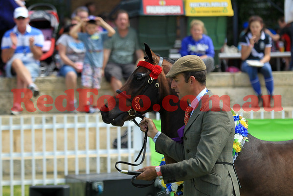 2014 10 01 Perth Royal Show Riding Pony Morning