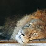 Sleeping Giant.jpg