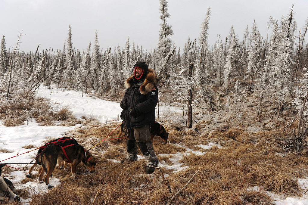 . Musher Rick Casillo stops to snack his dogs next to the trail in the middle of the Farewell Burn during the Iditarod Trail Sled Dog Race on Tuesday, March 4, 2014. (AP Photo/The Anchorage Daily News, Bob Hallinen)