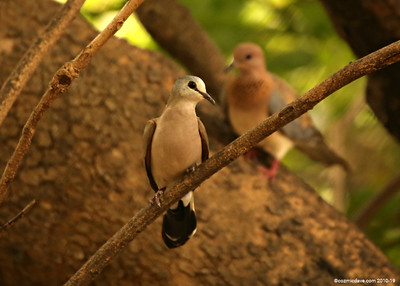 Birds in The Gambia, 2015 - Set 2