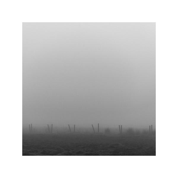 356_Fog_10x10.jpg