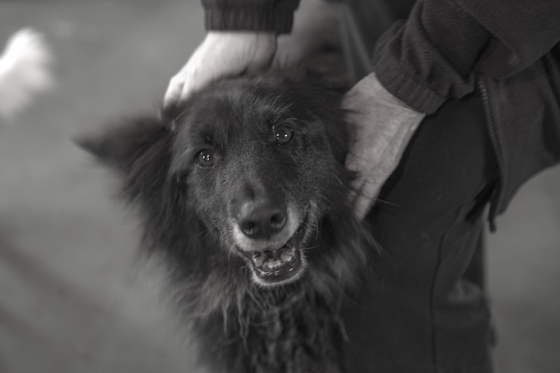 DogsAid-21.jpg
