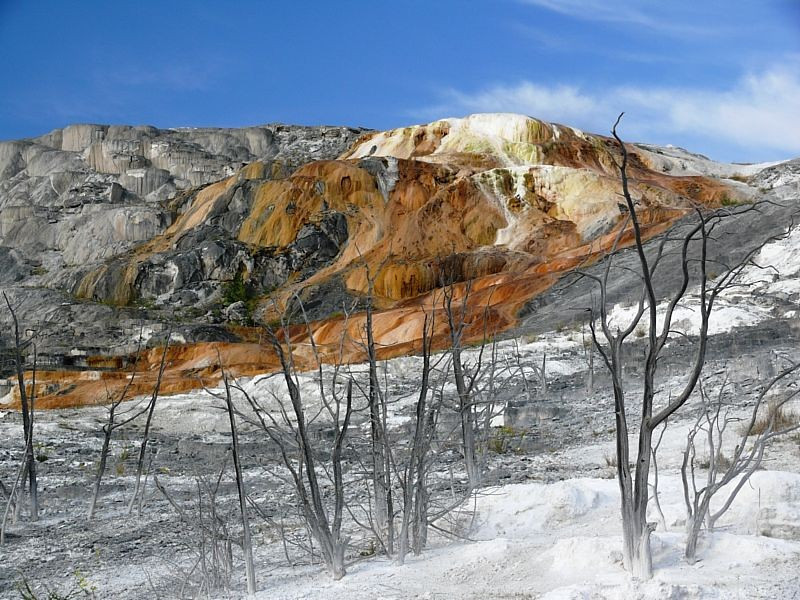 Jupiter Spring. These trees were overrun by the mineral deposits from the spring and are now preserved by them.