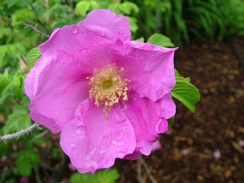 Flowers 057.jpg