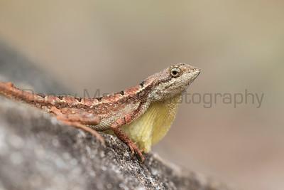 India - Reptiles & Amphibians