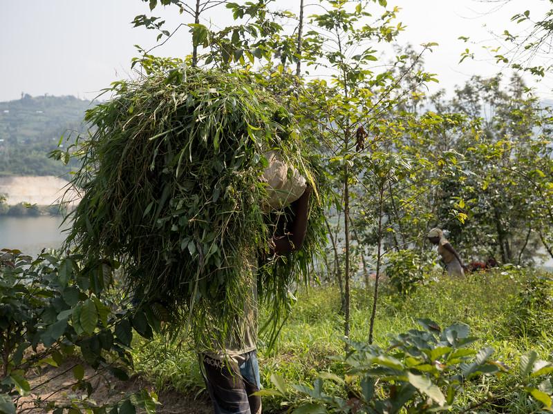 RichardTerborg_RwandaPP1_75.jpg