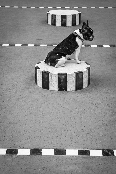DOG_COLONNES_DE_BUREN_STRIPES_PARIS.jpg