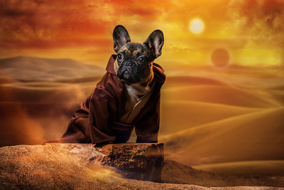 Obi Wan the Frenchie Star Wars series