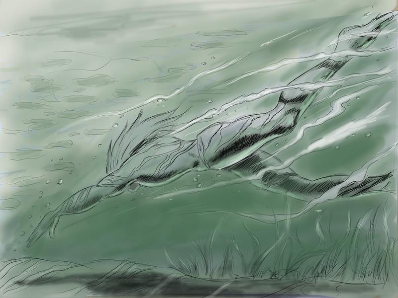 swimming copy 2.jpg