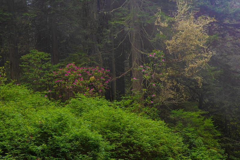 redwoodsFin29-1184.jpg