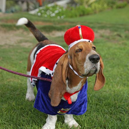 10-30-16: Halloween Dog Parade
