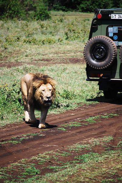 Ngorongoro (132).JPG