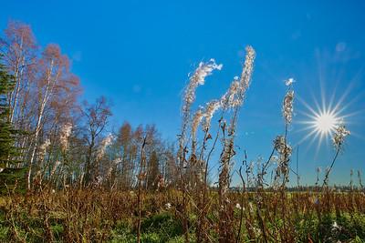 Fall in Fairbanks