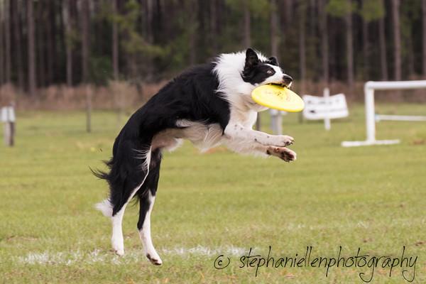 _MG_2730Up_dog_International_2016_StephaniellenPhotography.jpg
