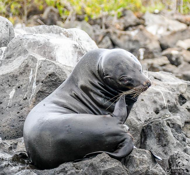 2018 Lobos Island-3.jpg