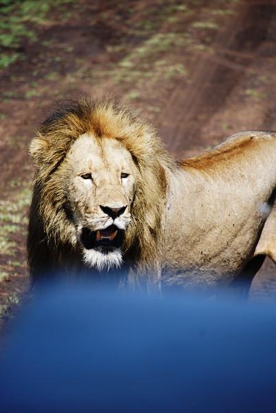 Ngorongoro (109).JPG