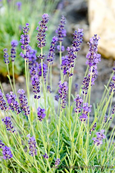 20120617_Garden_0018.jpg