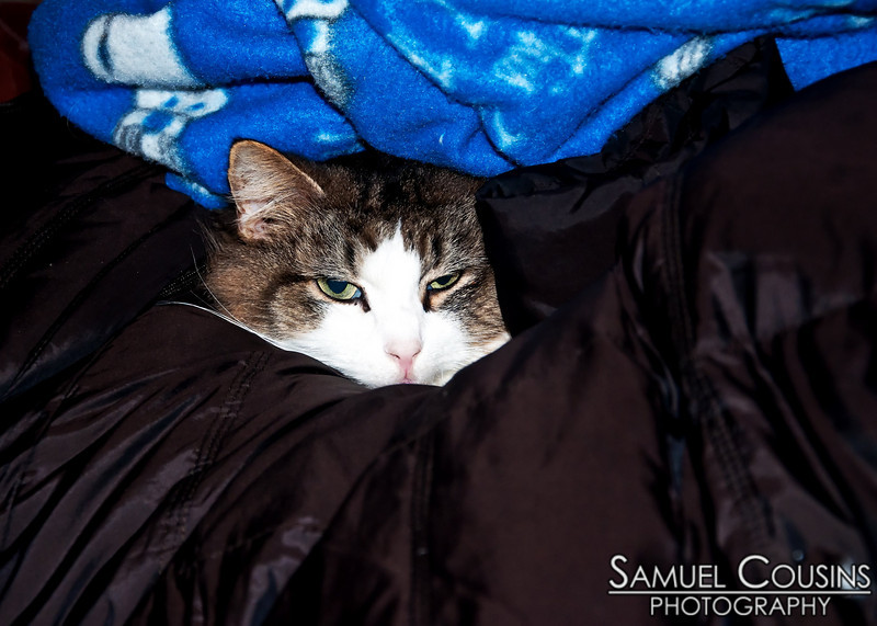 Tizzy was comfortable lying on the coat, and wouldn't move, even if that meant having an ugly snuggie dropped on top of her.