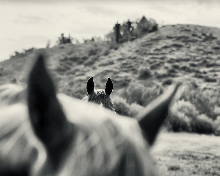 16-horses-f2-Rollei-Ortho25-CLontax-645.jpg