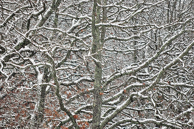 Backyard Winter Trees