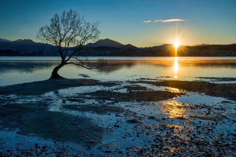 Sunrise Over Lake Wanaka and Willow