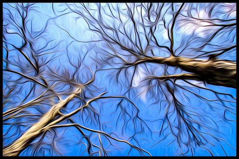 Trees on Blue Sky 488